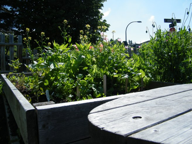 A bench in front of a raised bed full of flowers and vegetables.