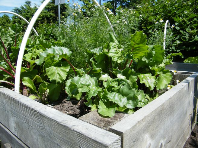A raised bed with a mix of flowers and vegetables.