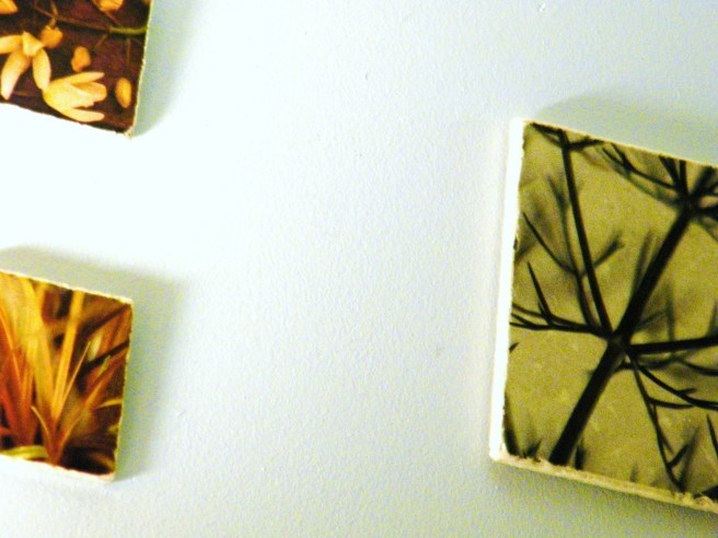 Photographic tiles against a grey wall.