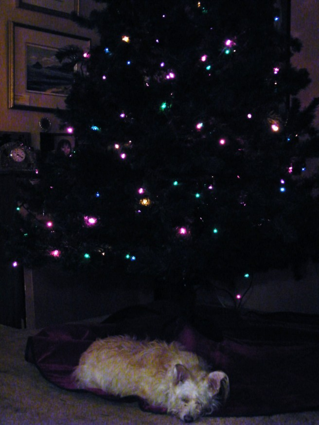 Roxy under my parents' Christmas tree.