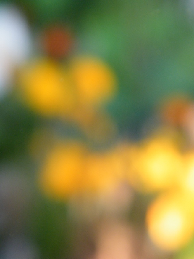A blurred out photo of flowers, mostly yellow.