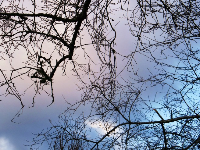 Branches against the sky.