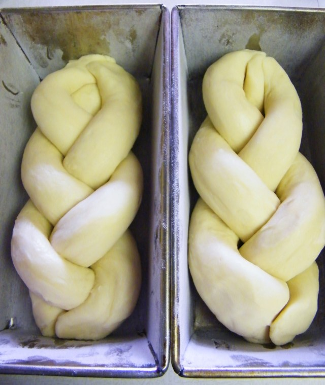 Brioche dough, braided and ready for its final rise.