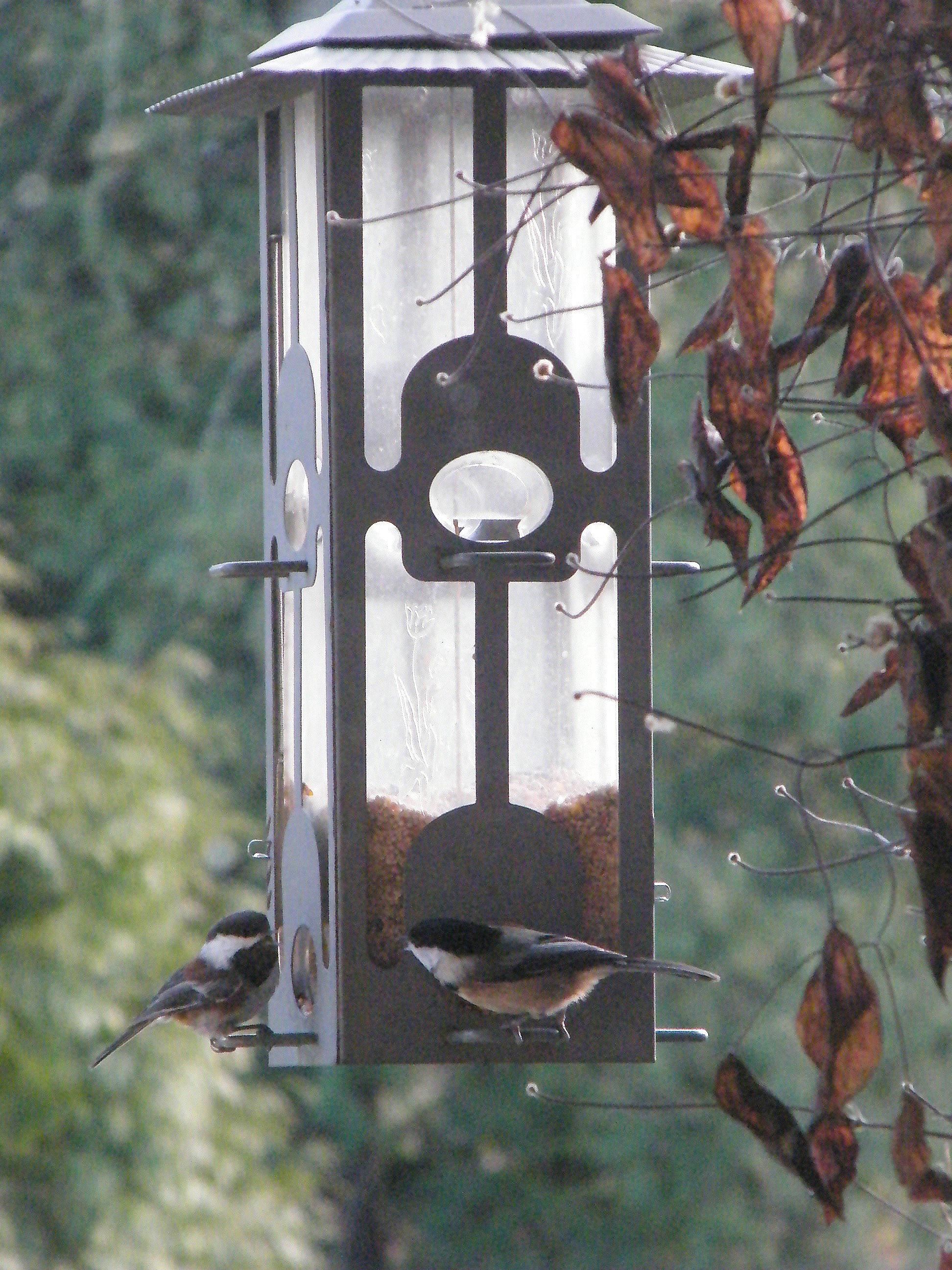 Birds at the feeder.