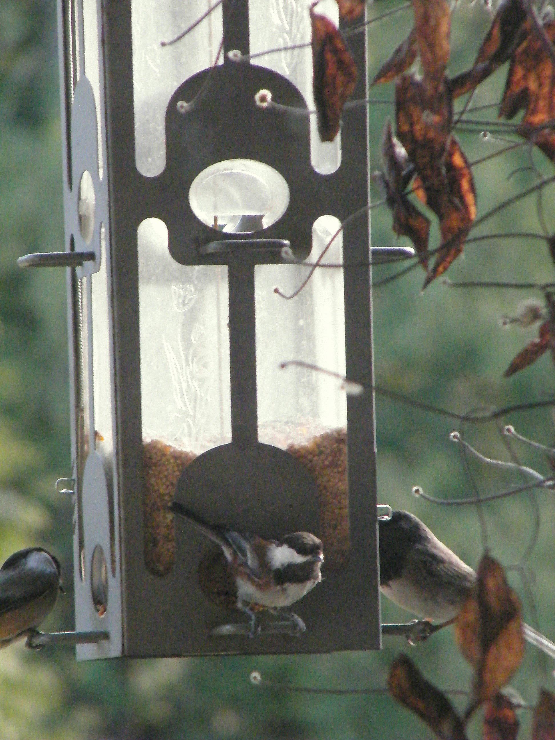 Stll more birds, feeding.
