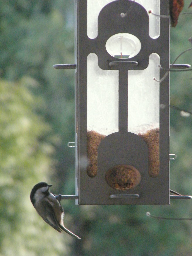 A bird at the feeder.