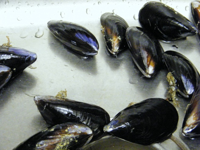 The mussels ready for scrubbing and debearding.
