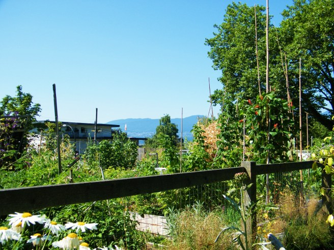 A veiw over the fence at Pandora Park's community gardens.