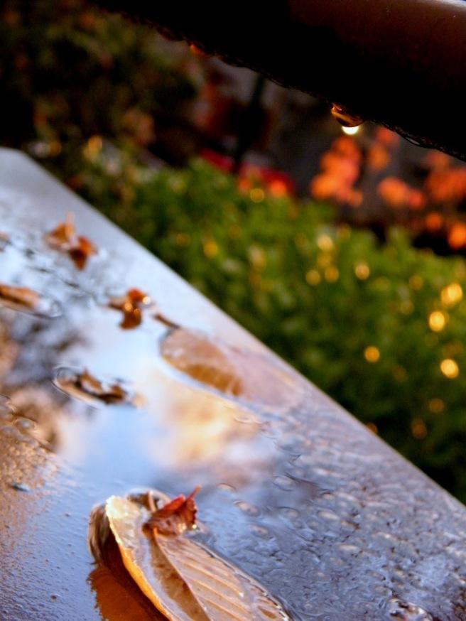 Post-rain.