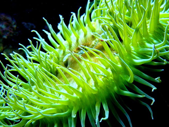 Vibrant green sea anenome