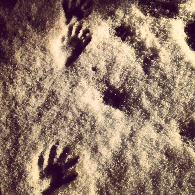 Raccoon prints in our backyard.