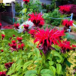 East Van Flowers