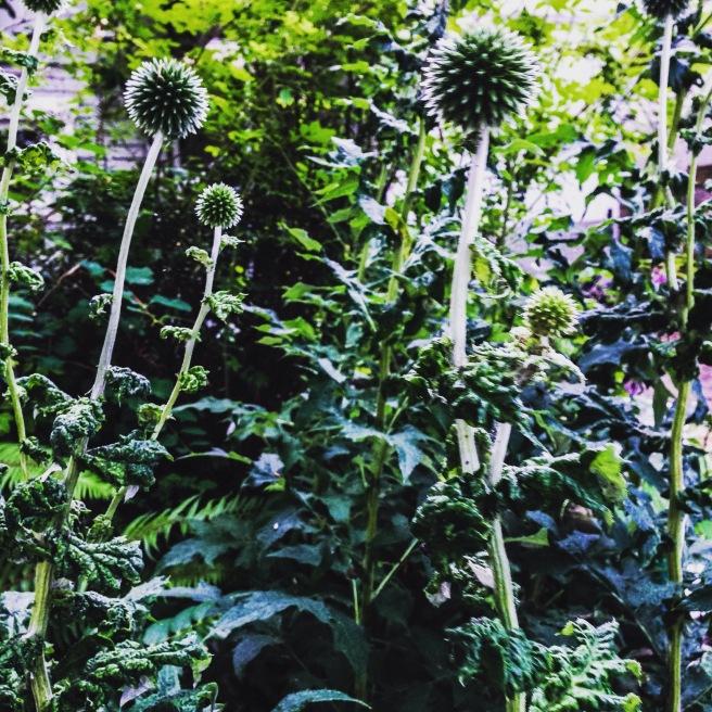 East Van Foliage