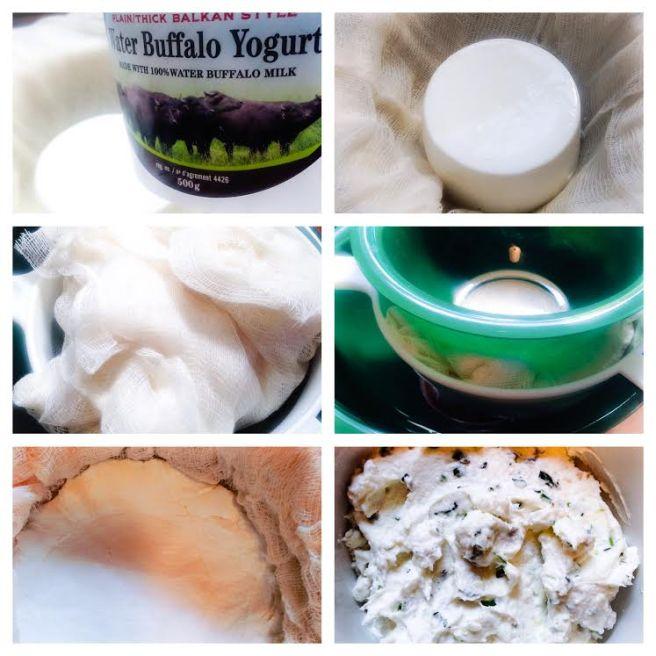 Making herbed water buffalo cheese