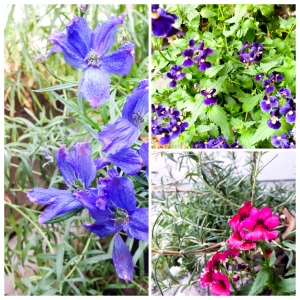 The fading flowers of September
